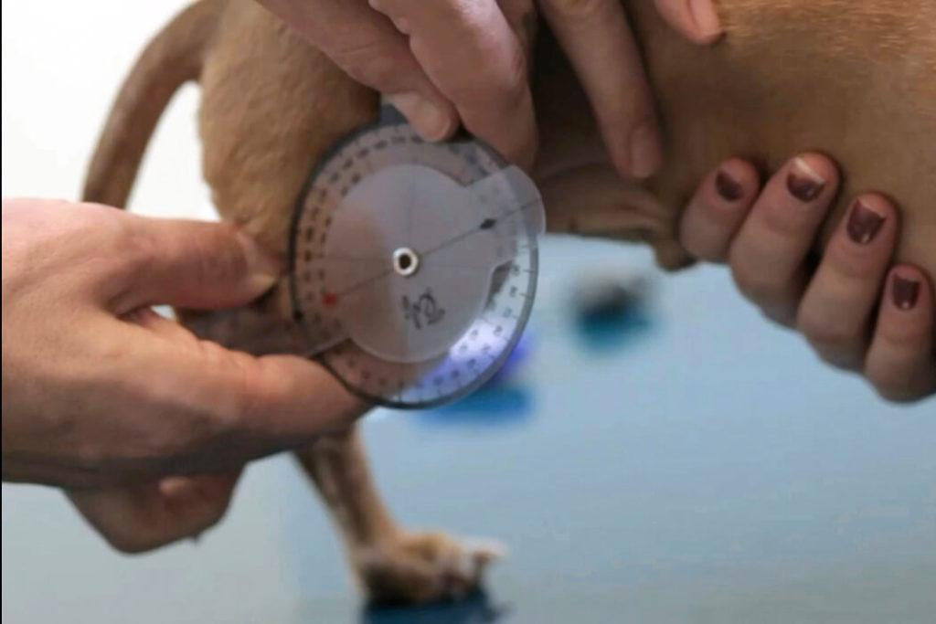 Kutya állapotfelmérés és vizsgálat