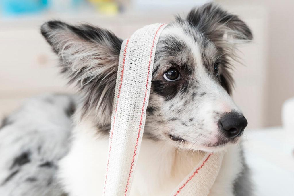 Kutya sebészet